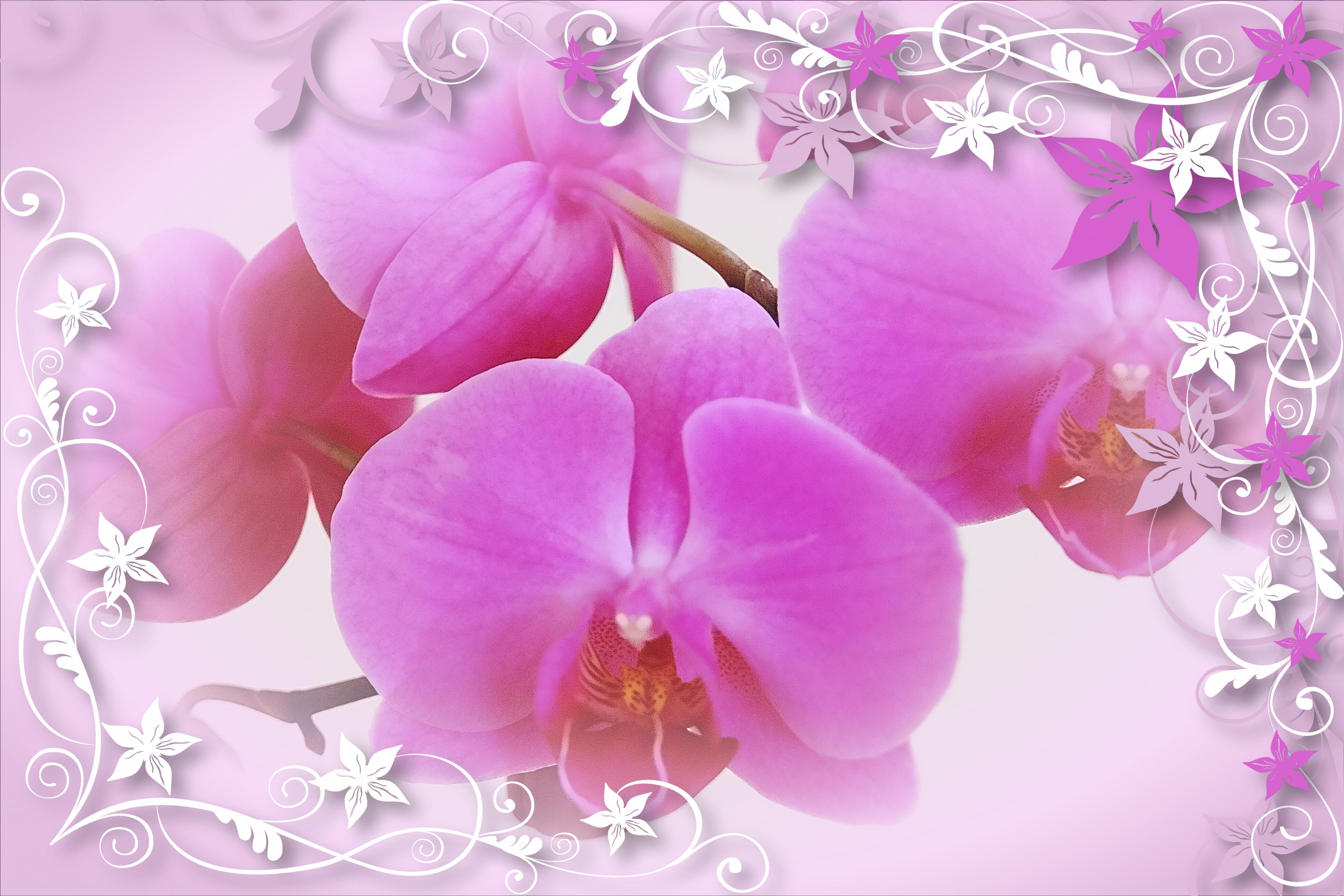 Изображение, поздравительные открытки с днем рождения орхидеи